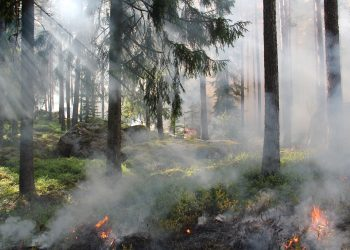 Eagle Creek Fire Resources