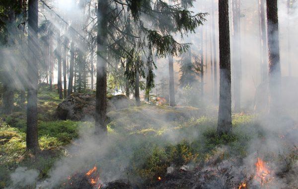 Eagle Creek Fire Resources