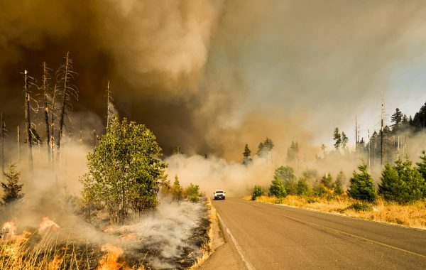 Wildfire Resources: Cleanup is Progressing
