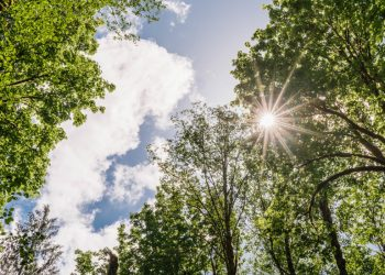 Hot Weather in Oregon Begins: Are You Prepared?